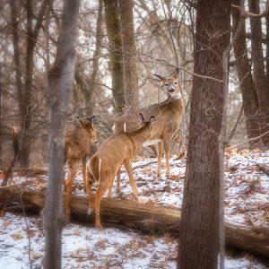 Wildlife Photography Prints